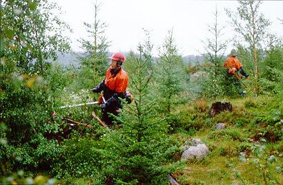 Skogtjenester